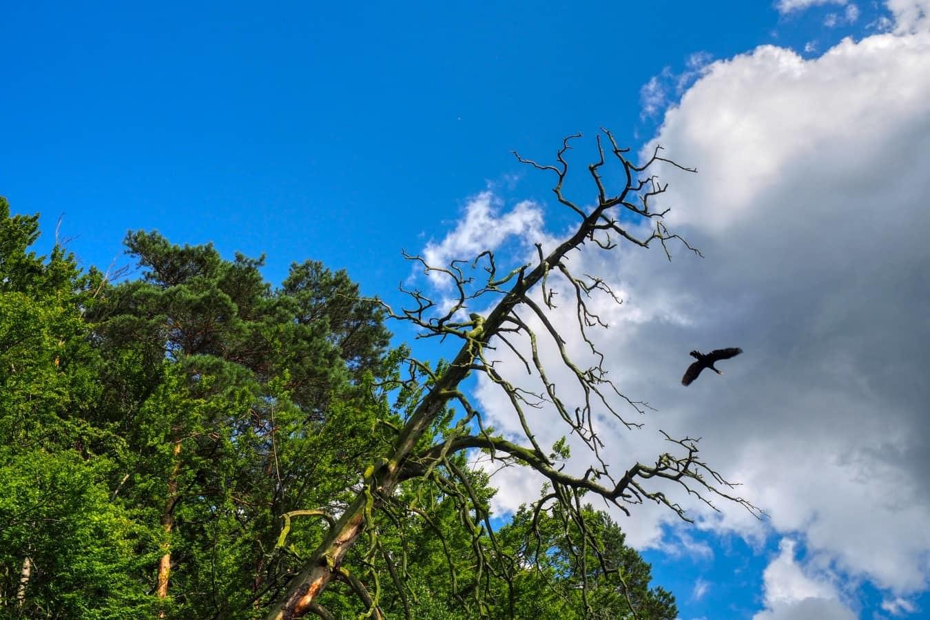 naturpark-wandern-uckermark