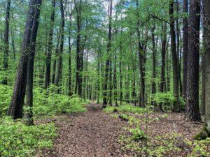 naturparkfuehrungen-uckermark-2