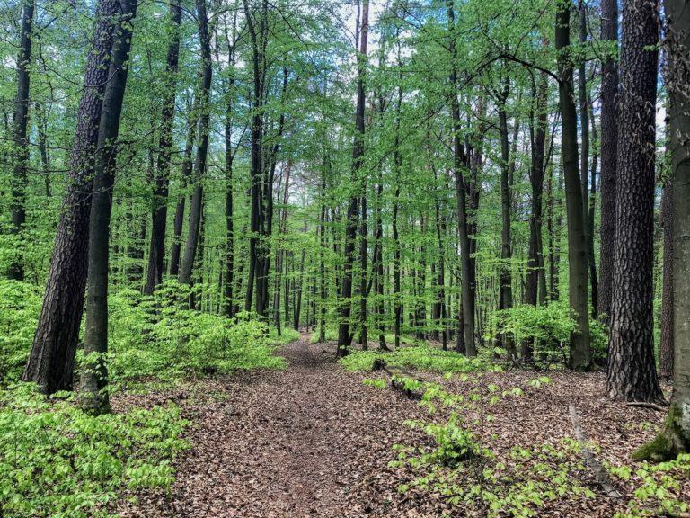 naturparkfuehrungen uckermark 2 768x576